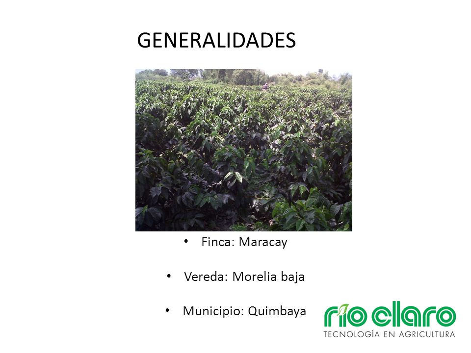 GENERALIDADES Finca: Maracay Vereda: Morelia baja Municipio: Quimbaya
