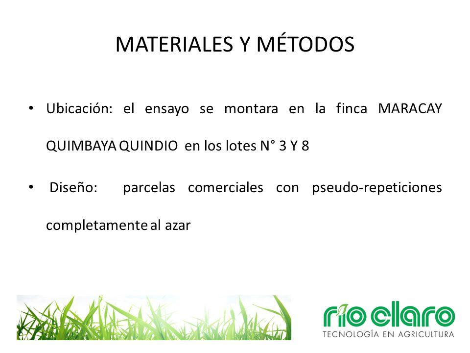 MATERIALES Y MÉTODOS Ubicación: el ensayo se montara en la finca MARACAY QUIMBAYA QUINDIO en los lotes N° 3 Y 8.