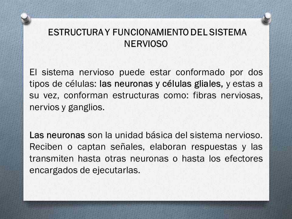 ESTRUCTURA Y FUNCIONAMIENTO DEL SISTEMA NERVIOSO El sistema nervioso puede estar conformado por dos tipos de células: las neuronas y células gliales, y estas a su vez, conforman estructuras como: fibras nerviosas, nervios y ganglios.