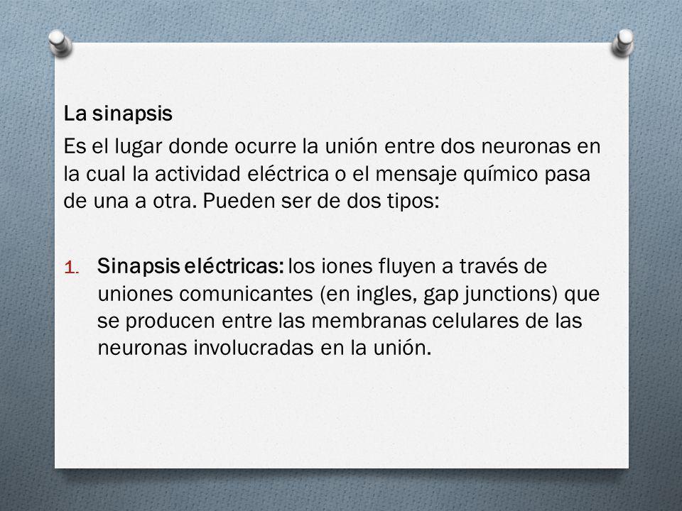 La sinapsis