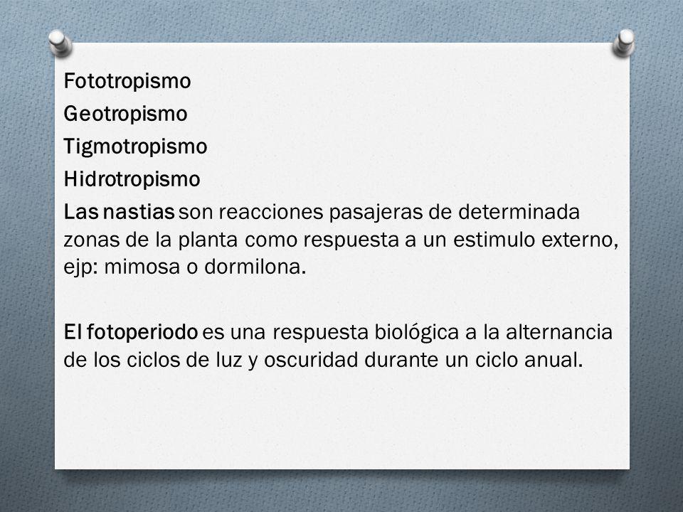 Fototropismo Geotropismo Tigmotropismo Hidrotropismo Las nastias son reacciones pasajeras de determinada zonas de la planta como respuesta a un estimulo externo, ejp: mimosa o dormilona.