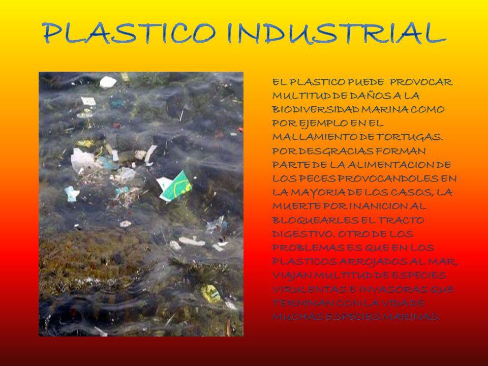 PLASTICO INDUSTRIAL EL PLASTICO PUEDE PROVOCAR MULTITUD DE DAÑOS A LA BIODIVERSIDAD MARINA COMO POR EJEMPLO EN EL MALLAMIENTO DE TORTUGAS.