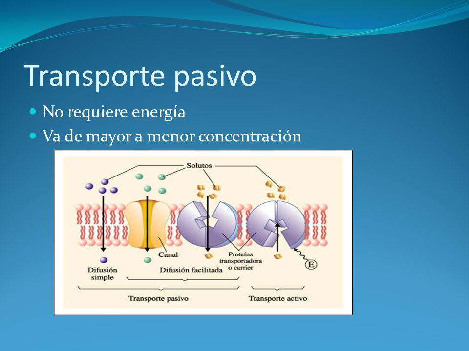 Transporte pasivo No requiere energía