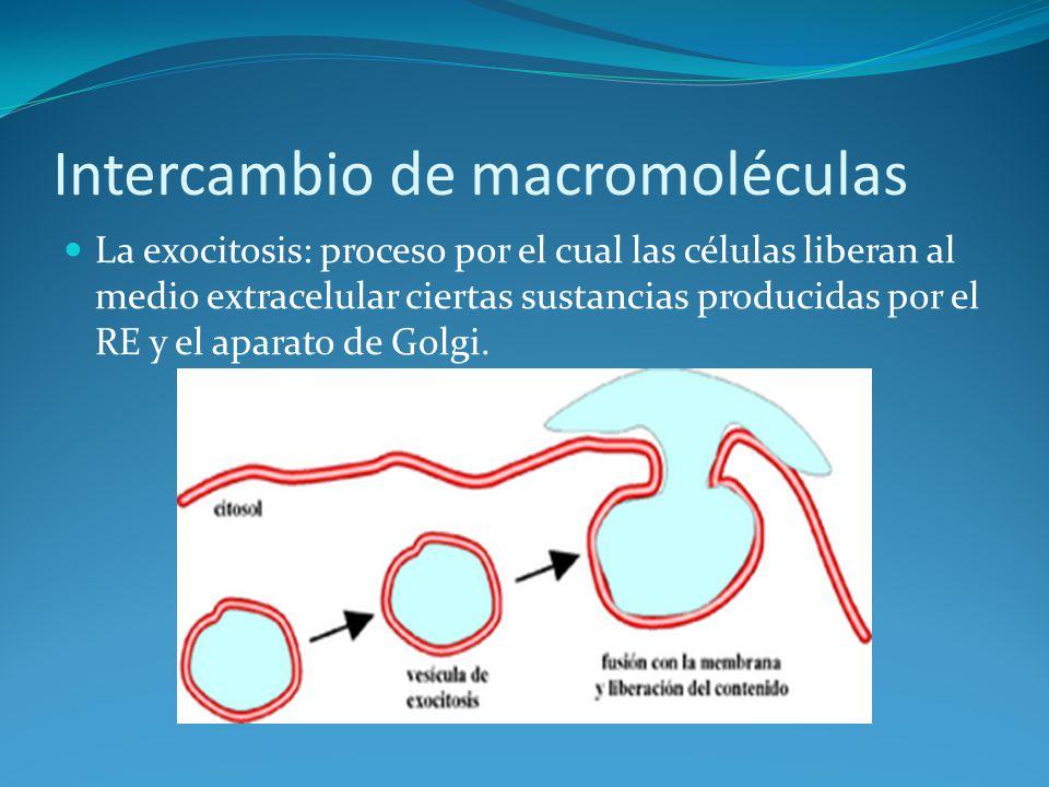 Intercambio de macromoléculas