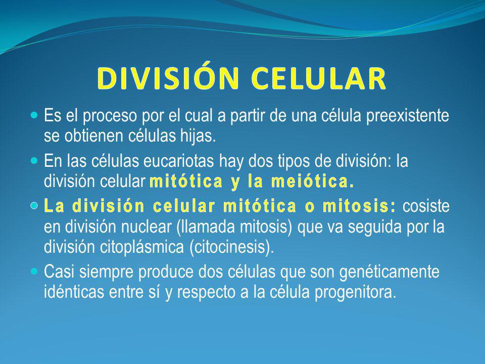 DIVISIÓN CELULAR Es el proceso por el cual a partir de una célula preexistente se obtienen células hijas.