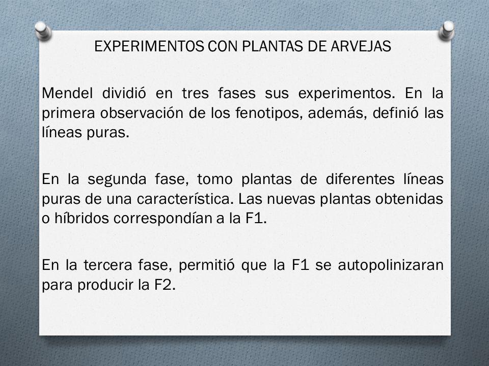 EXPERIMENTOS CON PLANTAS DE ARVEJAS