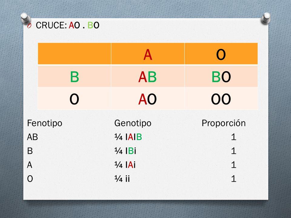 A O B AB BO AO OO CRUCE: AO . BO Fenotipo Genotipo Proporción