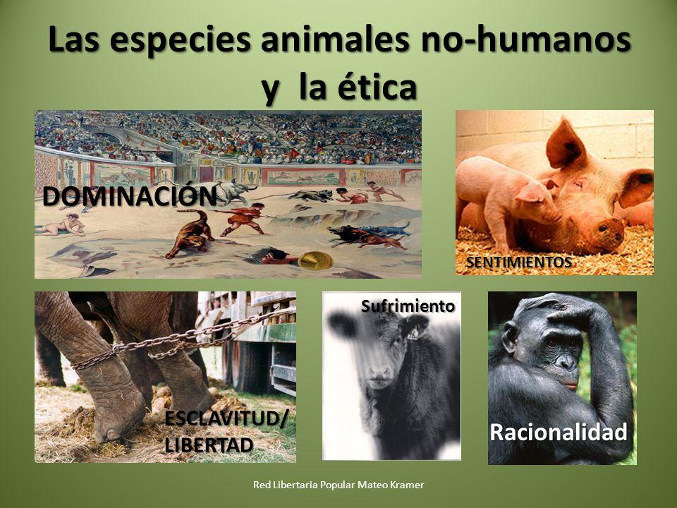 Las especies animales no-humanos y la ética