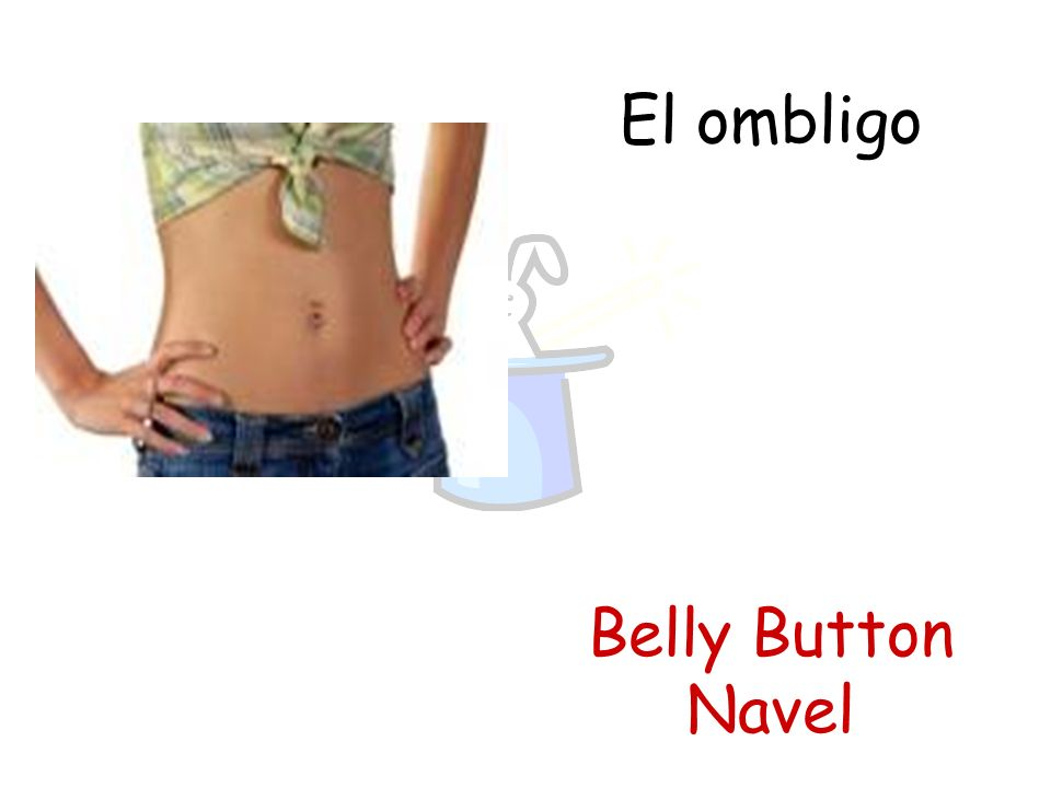 El ombligo Belly Button Navel