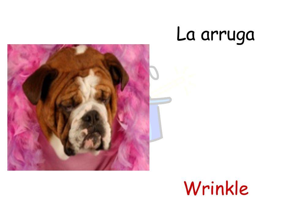 La arruga Wrinkle