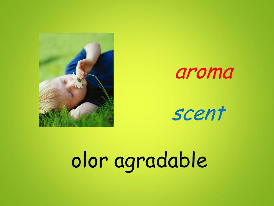 aroma scent olor agradable