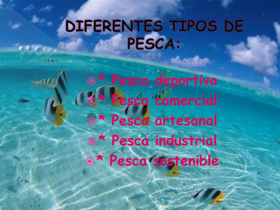 DIFERENTES TIPOS DE PESCA: