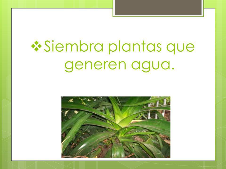 Siembra plantas que generen agua.