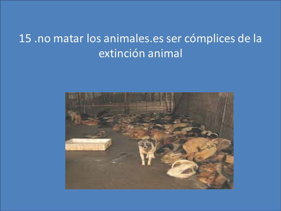 15 .no matar los animales.es ser cómplices de la extinción animal