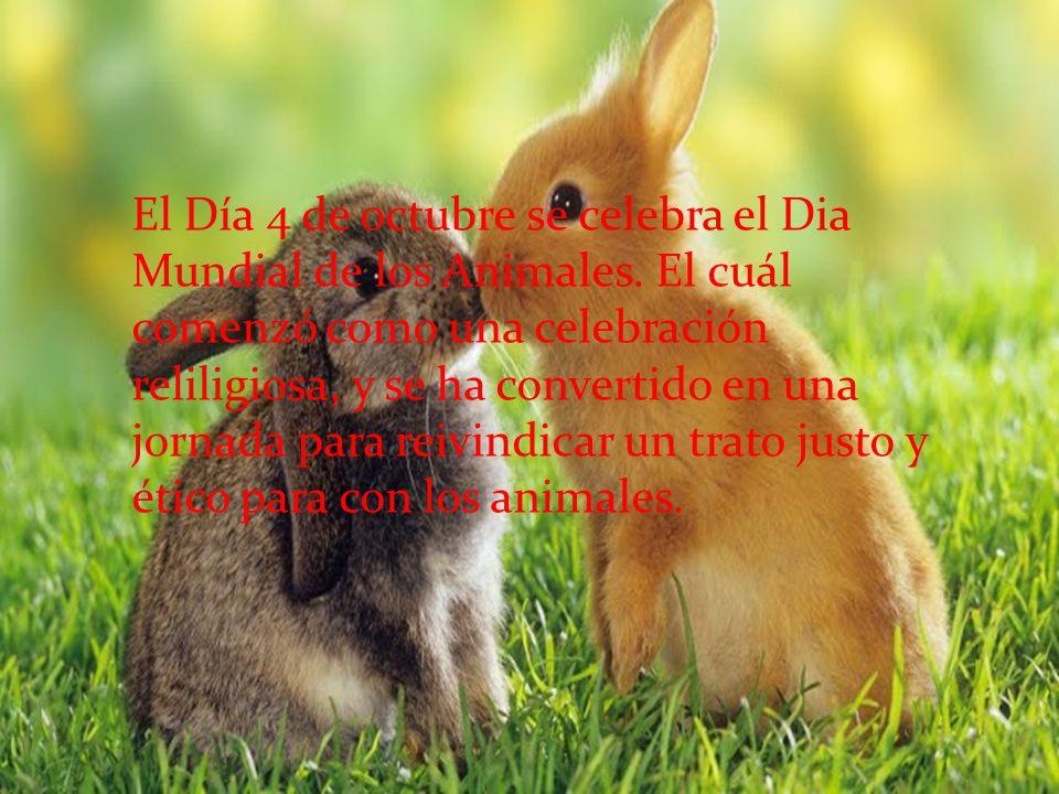 El Día 4 de octubre se celebra el Dia Mundial de los Animales
