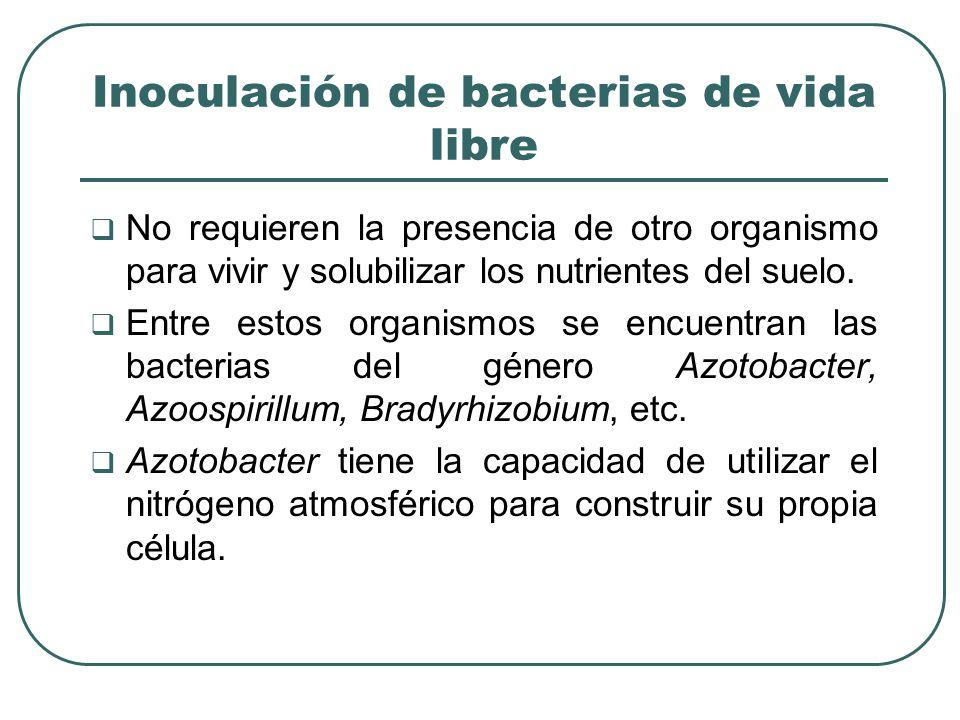 Inoculación de bacterias de vida libre