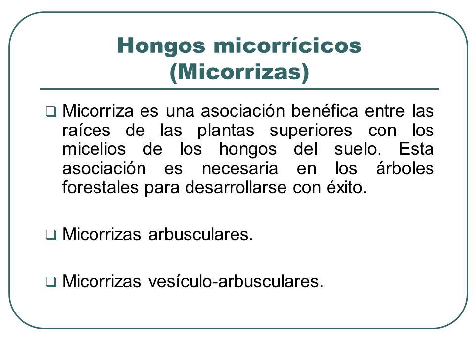 Hongos micorrícicos (Micorrizas)