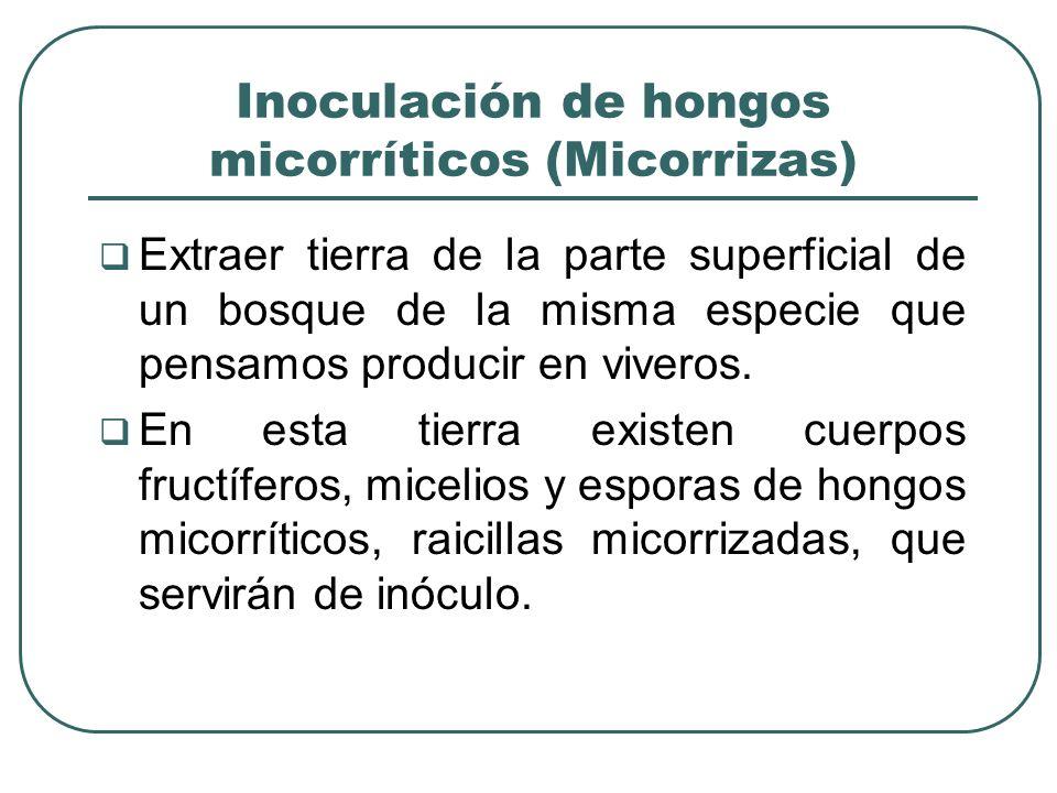 Inoculación de hongos micorríticos (Micorrizas)