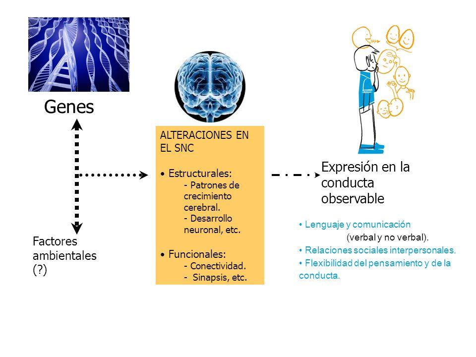 Genes Expresión en la conducta observable Factores ambientales ( )