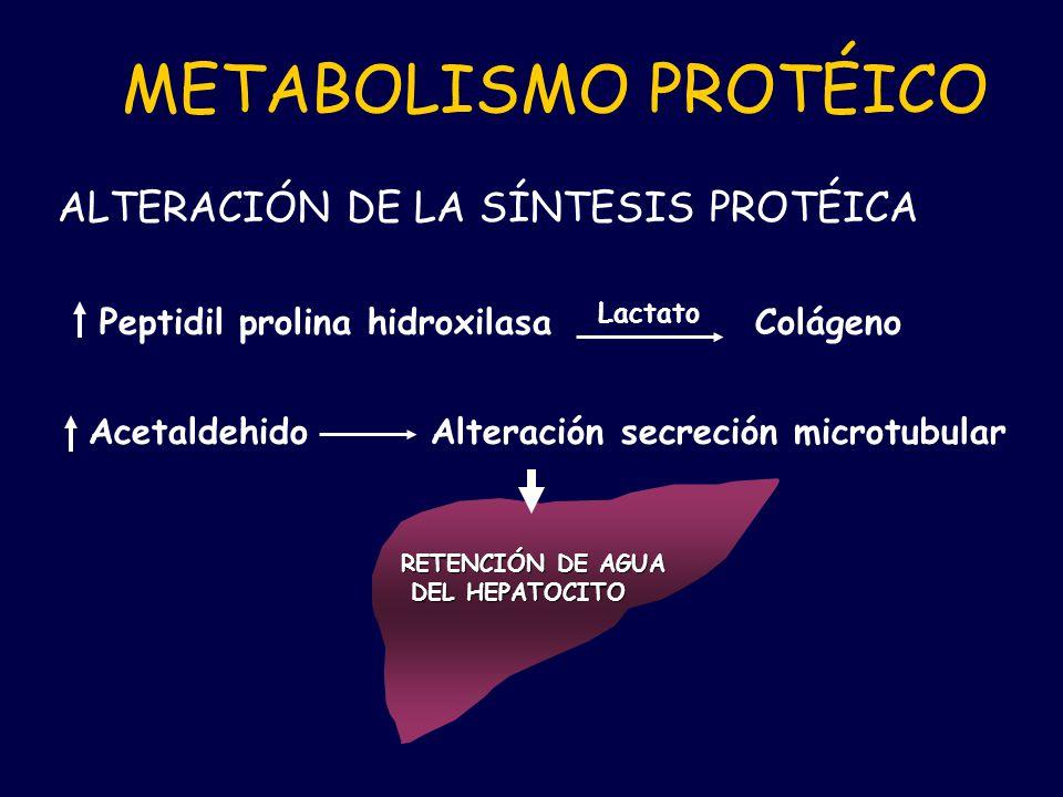 METABOLISMO PROTÉICO ALTERACIÓN DE LA SÍNTESIS PROTÉICA
