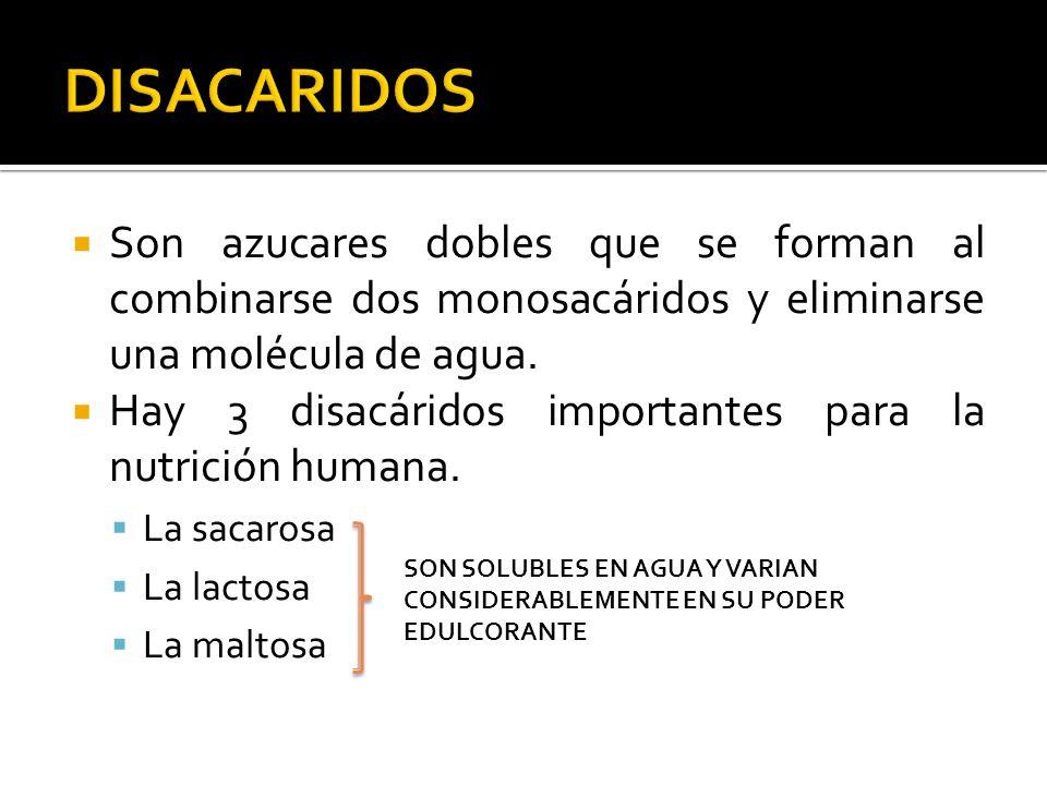 DISACARIDOS Son azucares dobles que se forman al combinarse dos monosacáridos y eliminarse una molécula de agua.