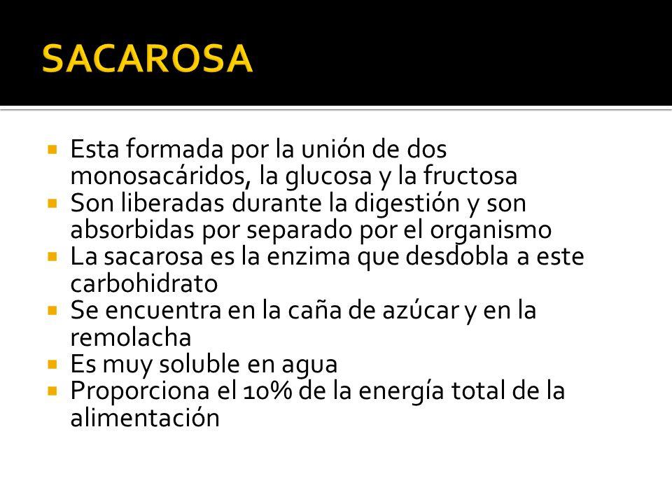 SACAROSA Esta formada por la unión de dos monosacáridos, la glucosa y la fructosa.