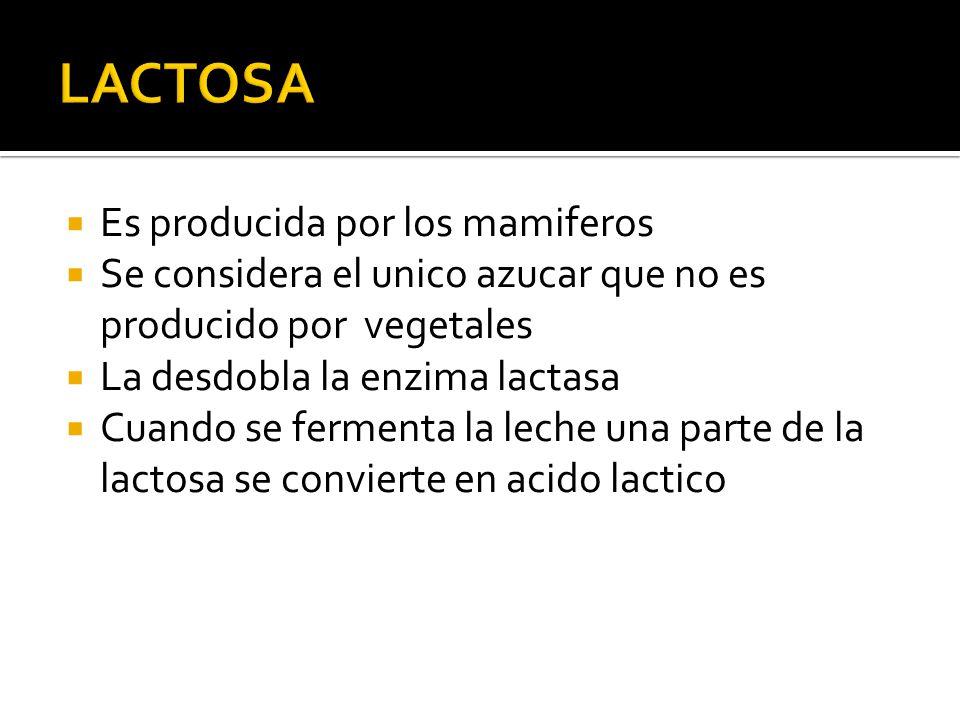 LACTOSA Es producida por los mamiferos