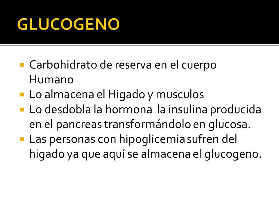 GLUCOGENO Carbohidrato de reserva en el cuerpo Humano