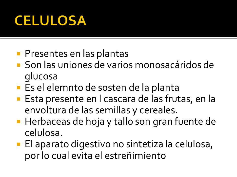 CELULOSA Presentes en las plantas
