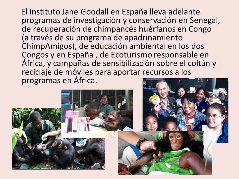 El Instituto Jane Goodall en España lleva adelante programas de investigación y conservación en Senegal, de recuperación de chimpancés huérfanos en Congo (a través de su programa de apadrinamiento ChimpAmigos), de educación ambiental en los dos Congos y en España , de Ecoturismo responsable en África, y campañas de sensibilización sobre el coltán y reciclaje de móviles para aportar recursos a los programas en África.