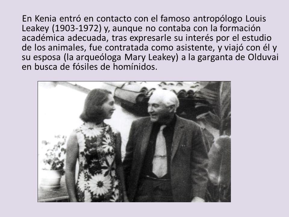 En Kenia entró en contacto con el famoso antropólogo Louis Leakey (1903-1972) y, aunque no contaba con la formación académica adecuada, tras expresarle su interés por el estudio de los animales, fue contratada como asistente, y viajó con él y su esposa (la arqueóloga Mary Leakey) a la garganta de Olduvai en busca de fósiles de homínidos.
