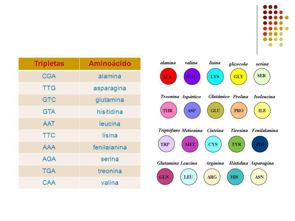 Tripletas Aminoácido CGA alamina TTG asparagina GTC glutamina GTA