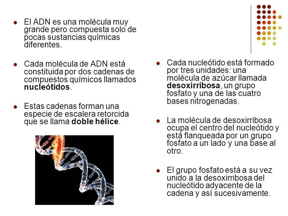 El ADN es una molécula muy grande pero compuesta solo de pocas sustancias químicas diferentes.