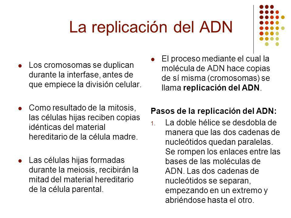 La replicación del ADN El proceso mediante el cual la molécula de ADN hace copias de sí misma (cromosomas) se llama replicación del ADN.