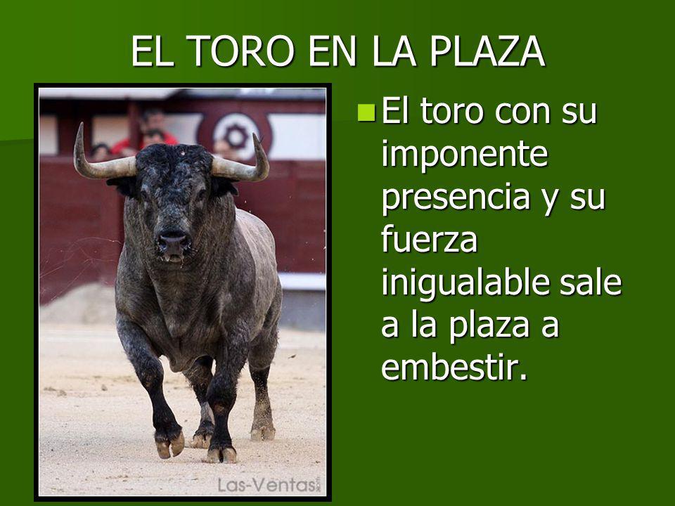 EL TORO EN LA PLAZA El toro con su imponente presencia y su fuerza inigualable sale a la plaza a embestir.