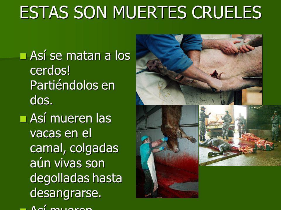 ESTAS SON MUERTES CRUELES