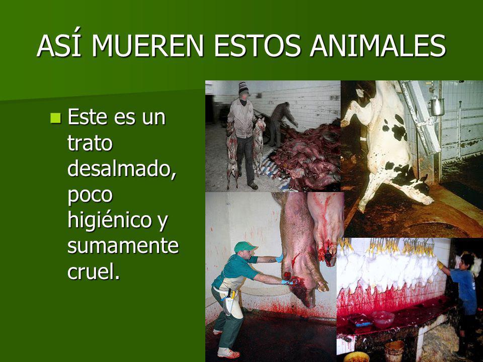 ASÍ MUEREN ESTOS ANIMALES