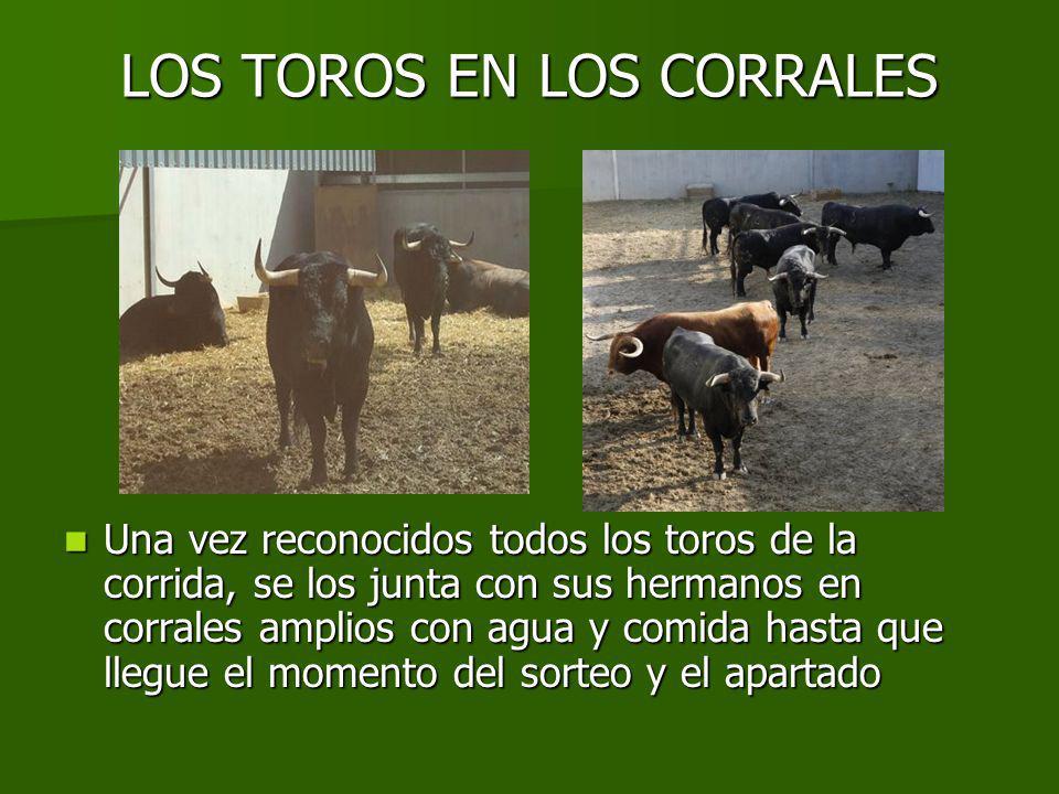 LOS TOROS EN LOS CORRALES
