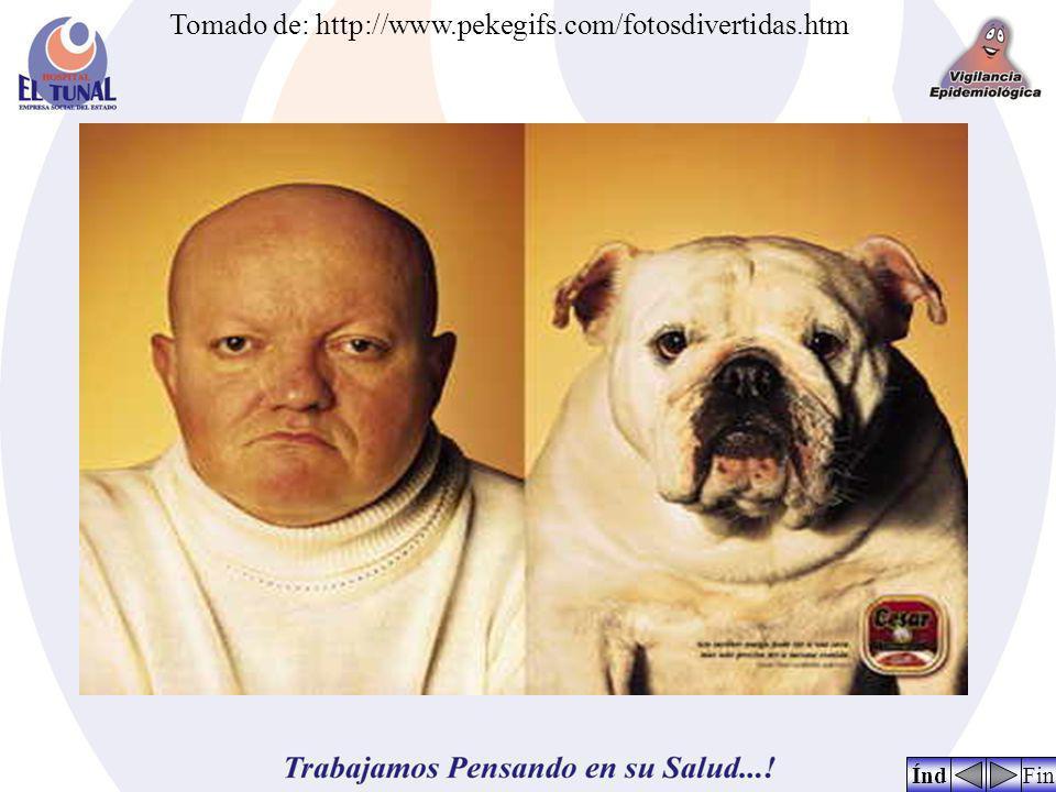 Tomado de: http://www.pekegifs.com/fotosdivertidas.htm