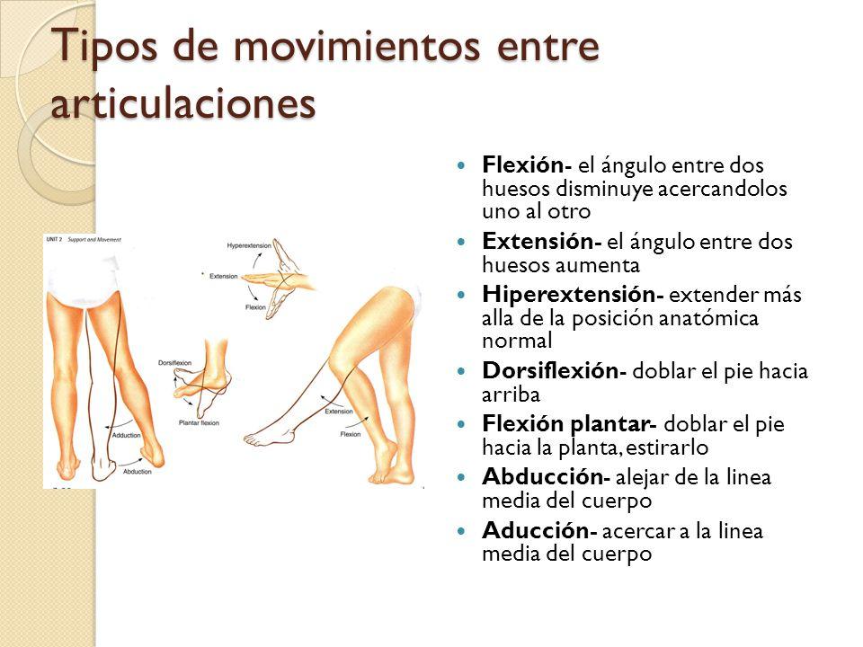 Tipos de movimientos entre articulaciones