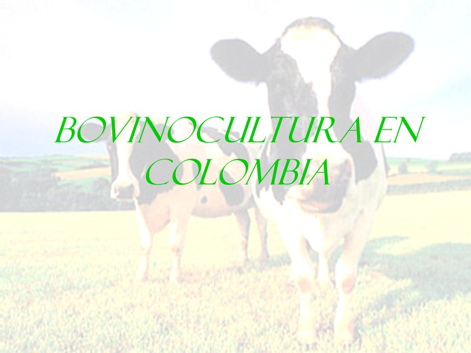 BOVINOCULTURA EN COLOMBIA