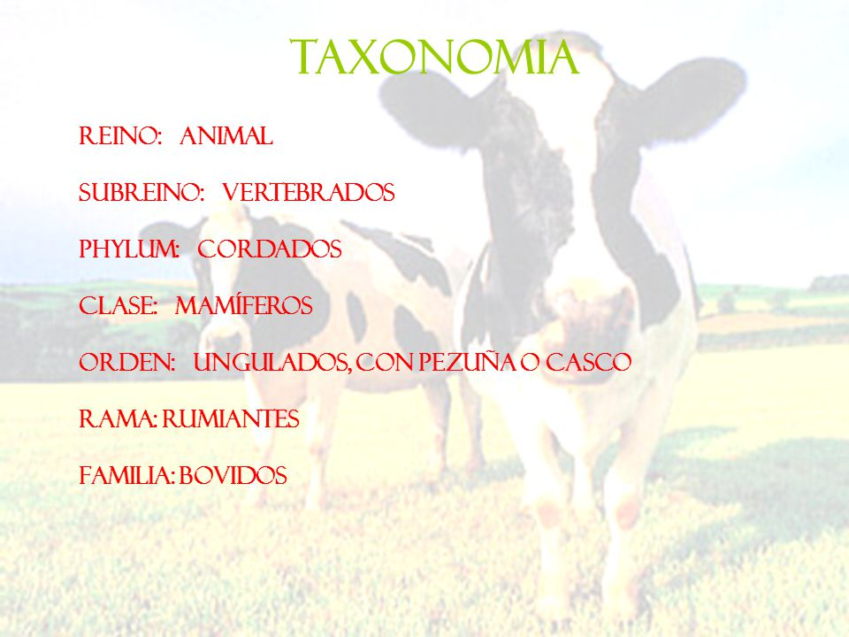 TAXONOMIA Reino: Animal Subreino: Vertebrados Phylum: Cordados