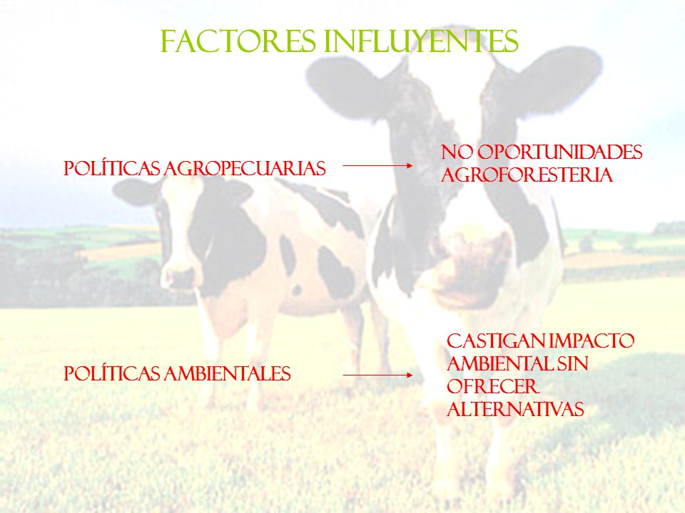 Factores influyentes No oportunidades agroforesteria