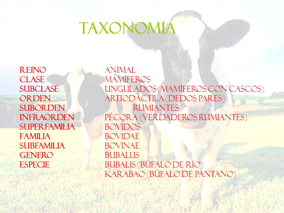 TAXONOMIA REINO Animal CLASE Mamíferos
