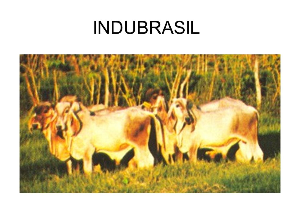 INDUBRASIL