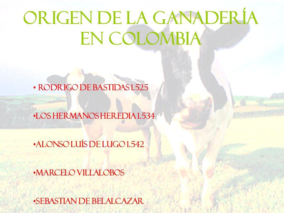 ORIGEN DE LA GANADERÍA EN COLOMBIA