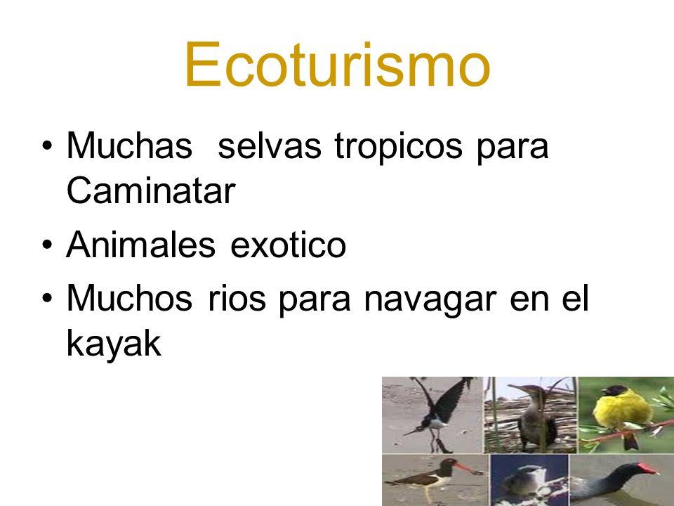 Ecoturismo Muchas selvas tropicos para Caminatar Animales exotico