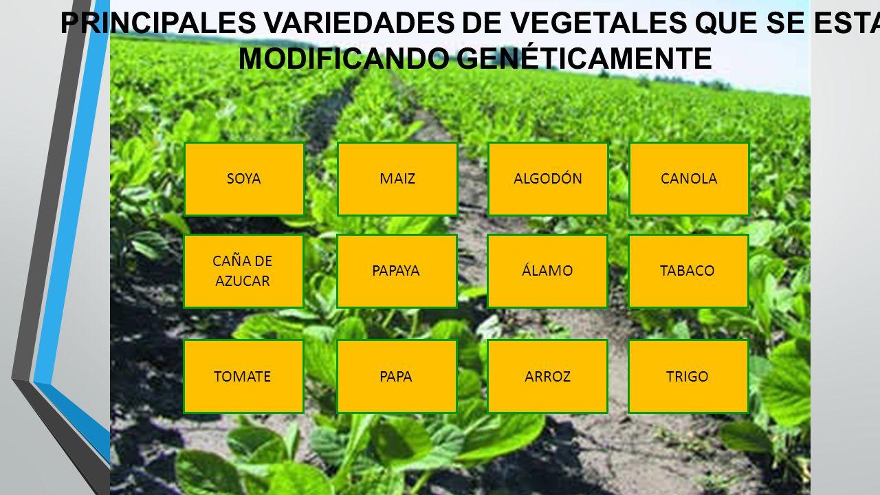 PRINCIPALES VARIEDADES DE VEGETALES QUE SE ESTA