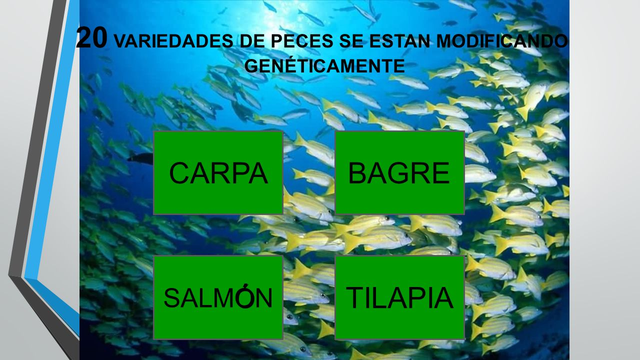 20 VARIEDADES DE PECES SE ESTAN MODIFICANDO