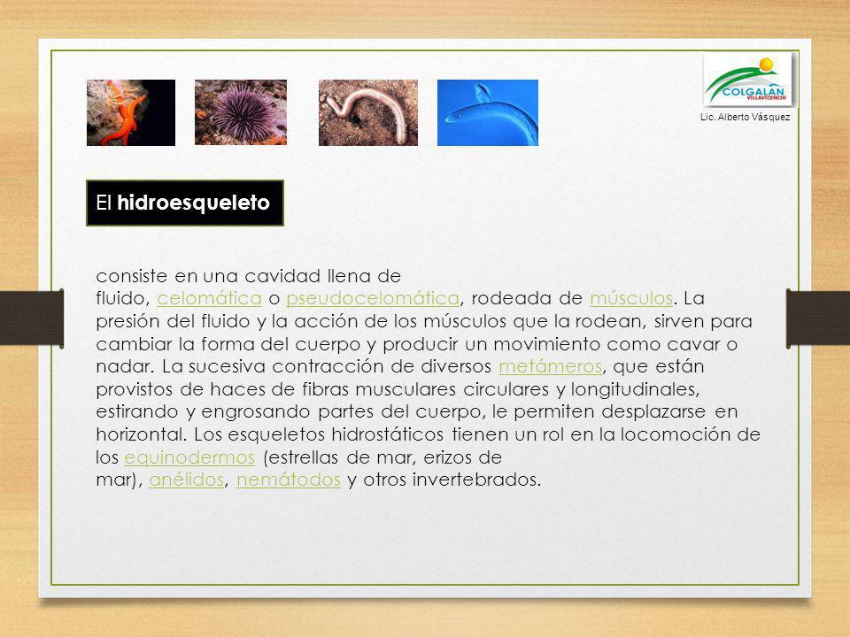 Lic. Alberto Vásquez El hidroesqueleto.